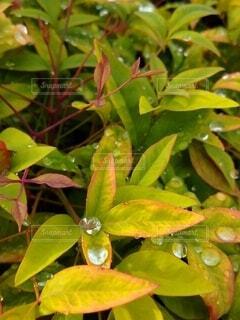 葉っぱのクローズアップの写真・画像素材[3719929]