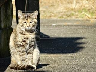 日向ぼっこしている猫の写真・画像素材[3693252]