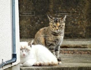 2匹の猫の写真・画像素材[3693254]
