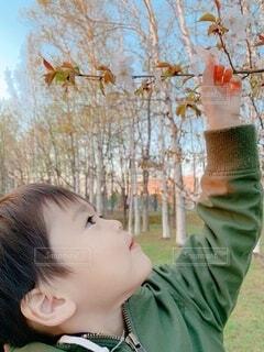 桜と息子の写真・画像素材[3778010]