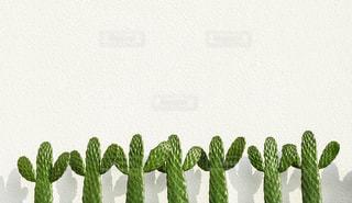 植物の写真・画像素材[693335]