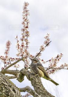 花の写真・画像素材[693338]