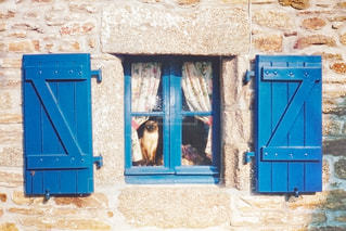 青い扉の前に座っている猫の写真・画像素材[718029]