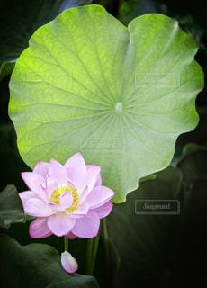近くの花のアップの写真・画像素材[781142]