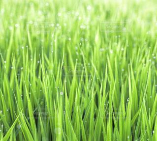 背の高い緑の草の写真・画像素材[787619]