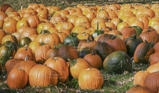 秋の写真・画像素材[833278]