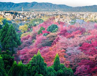 清水寺から見た京都市街と紅葉の写真・画像素材[839176]
