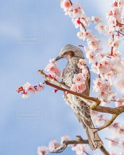 空を飛んでいる鳥の写真・画像素材[1084228]