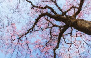 近くの木のアップの写真・画像素材[1084302]