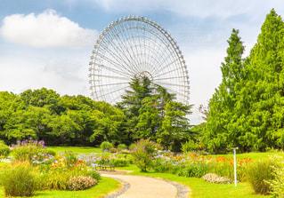 夏の万博記念公園から見た大観覧OSAKA WHEELの写真・画像素材[1225253]