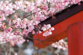 近くの花のアップの写真・画像素材[1227051]