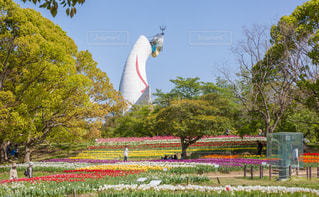 公園で凧の飛行人の写真・画像素材[1227075]