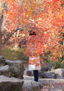 大きな岩の前に木 - No.1259422