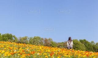 フィールドに黄色の花の人の写真・画像素材[1259467]