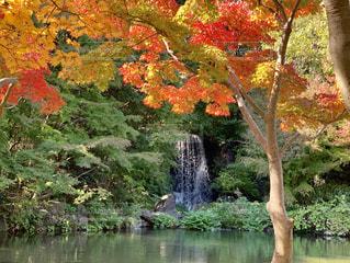 水の体の横にあるツリーの写真・画像素材[1613758]