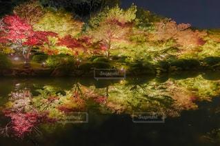 京都東寺のライトアップの写真・画像素材[1662669]