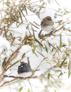 木の枝にとまる小鳥の写真・画像素材[1811004]