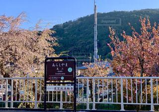 阪急嵐山駅と桜の写真・画像素材[2036514]