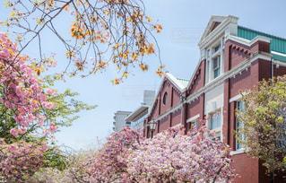造幣博物館と桜の通り抜けの写真・画像素材[2074153]