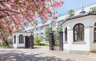 大阪造幣局の門と桜の通り抜けの写真・画像素材[2074154]