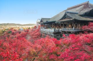 秋の清水寺本堂と京都市街の写真・画像素材[2744350]