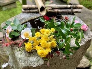 手水鉢に置かれた花の写真・画像素材[2777861]
