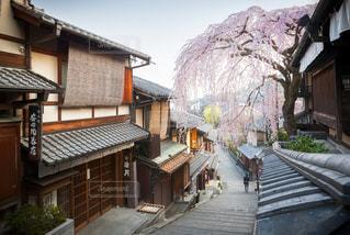 産寧坂と満開の枝垂れ桜の写真・画像素材[3071213]