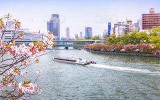 大川を運行するアクアライナーと大阪造幣局の桜の通り抜けの写真・画像素材[4098929]