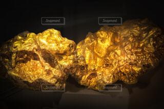 大きな金槐のクローズアップの写真・画像素材[4351862]