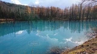 北海道 青の池の写真・画像素材[3981065]
