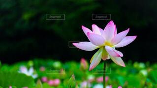 花のクローズアップの写真・画像素材[3692613]