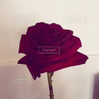 赤い花の写真・画像素材[891394]