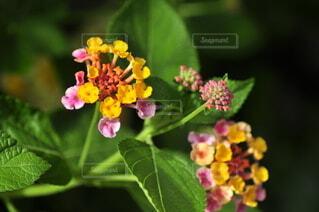 花のクローズアップの写真・画像素材[3693890]