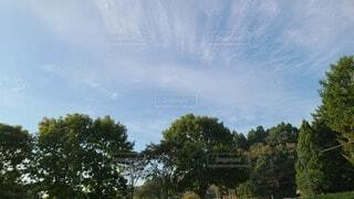 空と木の写真・画像素材[3722305]
