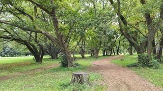 緑豊かな公園の写真・画像素材[3738370]