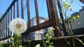 庭の隅の写真・画像素材[3697141]