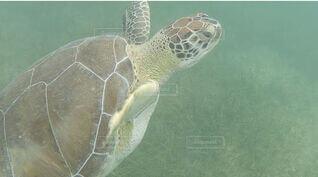 ウミガメに遭遇の写真・画像素材[3711538]