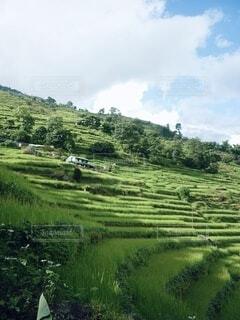 山の斜面に作られた田んぼの写真・画像素材[3822183]