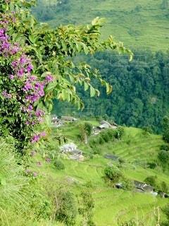 高地の斜面にある田畑と家の写真・画像素材[3822264]