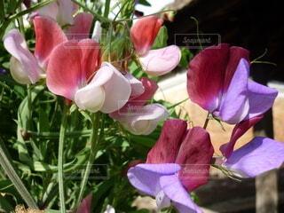 花のクローズアップの写真・画像素材[3879230]