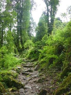 森の中の小道の写真・画像素材[3891461]