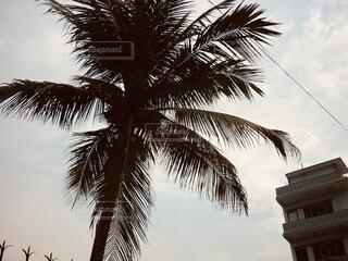 ヤシの木のクローズアップと建物の写真・画像素材[4018703]