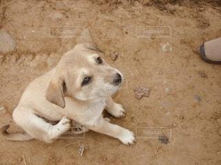 道端の子犬のクローズアップの写真・画像素材[4026614]