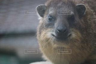 小さな動物のクローズアップの写真・画像素材[3704670]