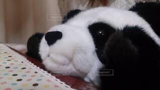 パンダのぬいぐるみの写真・画像素材[3701972]