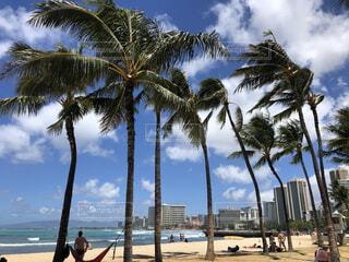 ハワイのビーチの写真・画像素材[3703477]