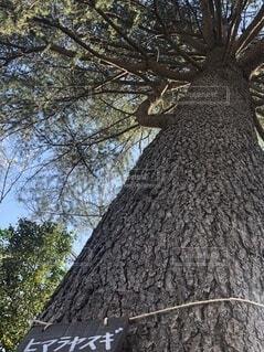 木のクローズアップの写真・画像素材[3739356]