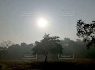 朝日とジャングルの一本の木の写真・画像素材[3859269]