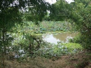 緑に囲まれた沼の写真・画像素材[4088848]