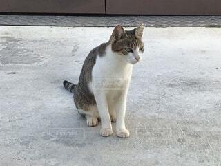 猫 003の写真・画像素材[3769174]
